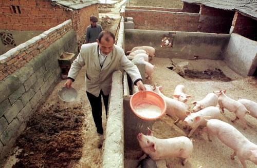 中国 農村 豚 に対する画像結果